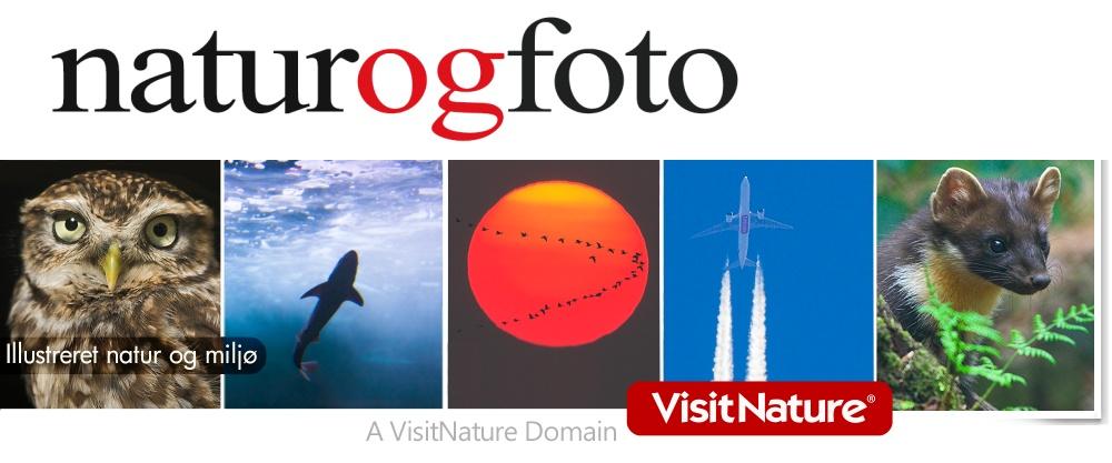 Naturogfoto.dk - kreative fotos og collager ideelt til annoncer og markedsføring